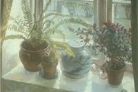 Plants on the Window Sill